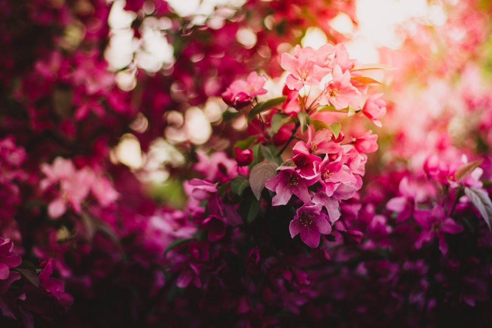 bloom-blossom-flora-101472